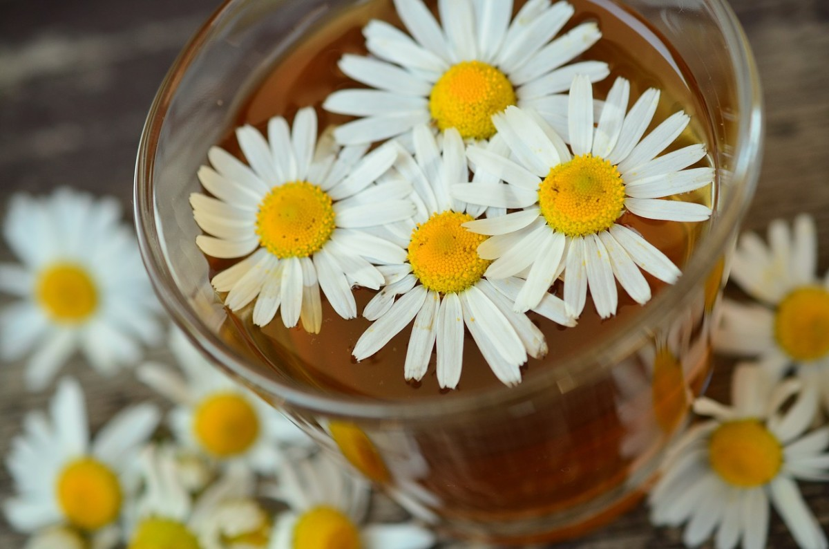 Traditional chamomile tea can promote sleep and relaxation.