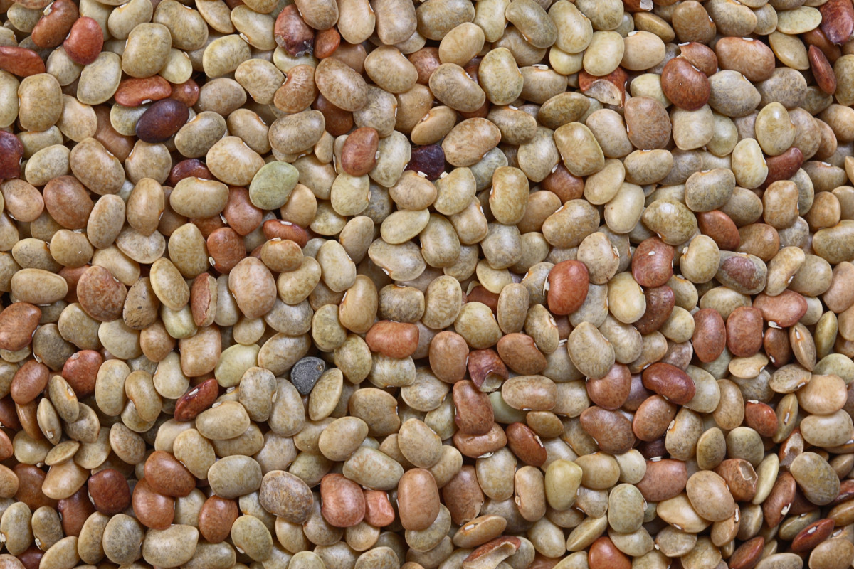 seeds of horsegram beans