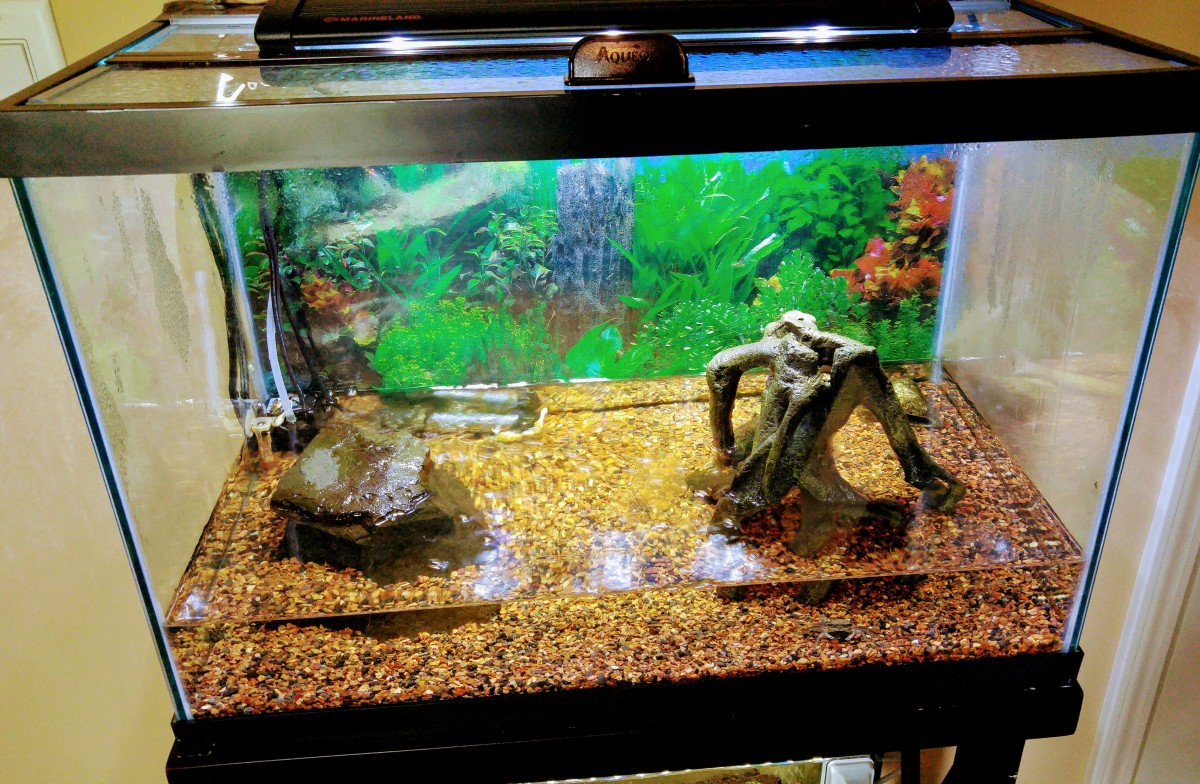 An example of an ideal fiddler crab tank setup.