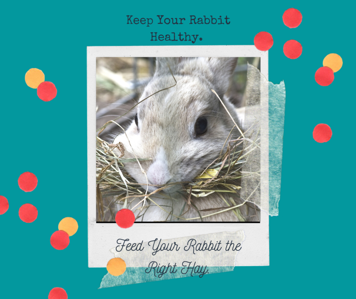 Feed your rabbit the right hay.