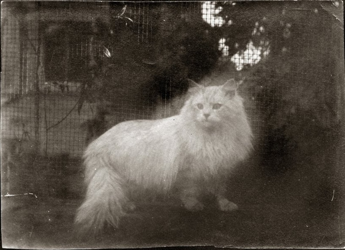 I have at least two ghost kitties living in my home. I enjoy them both, and think I would have liked Louisa's white cat, too.