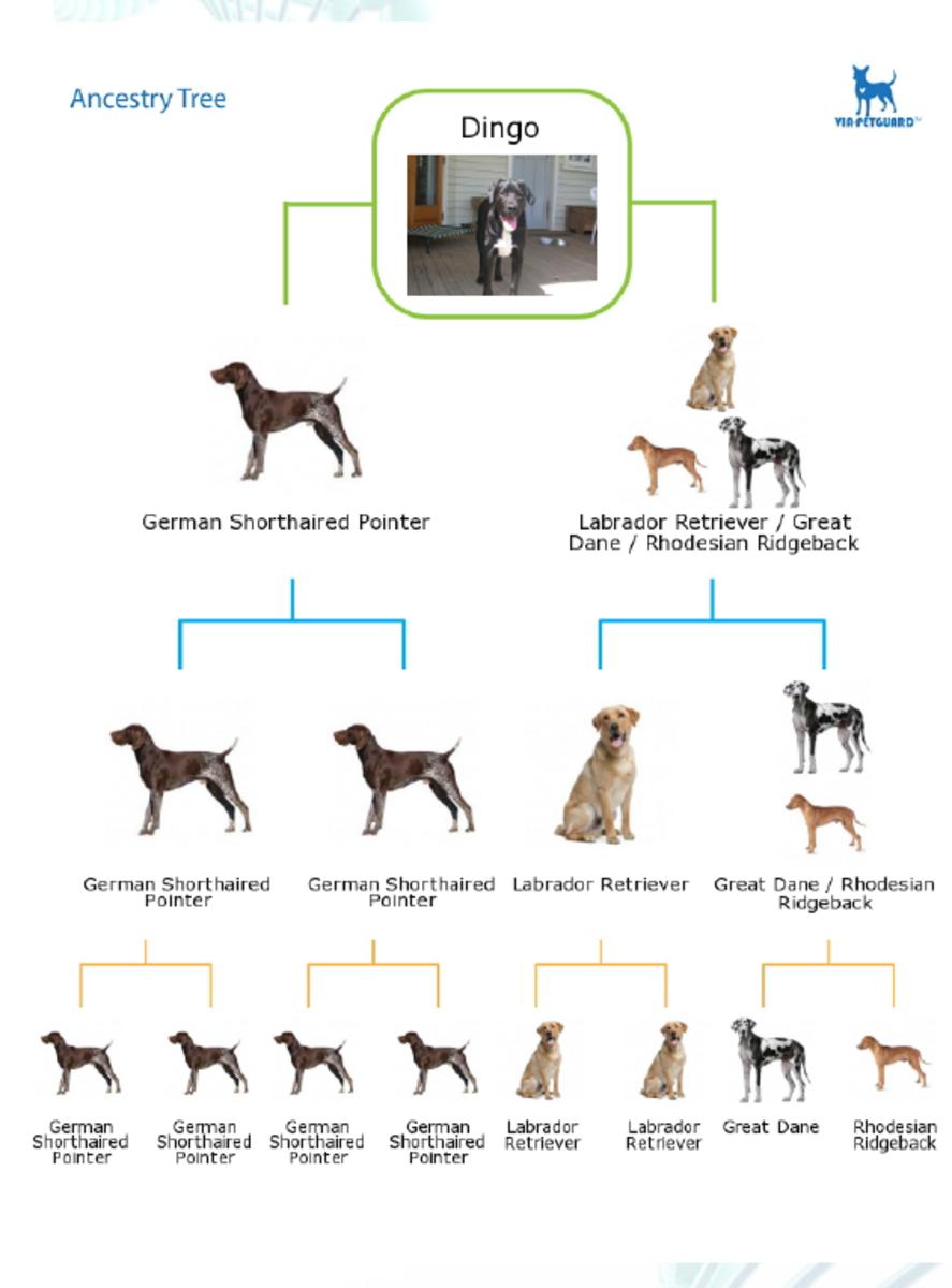 Dingo's family tree
