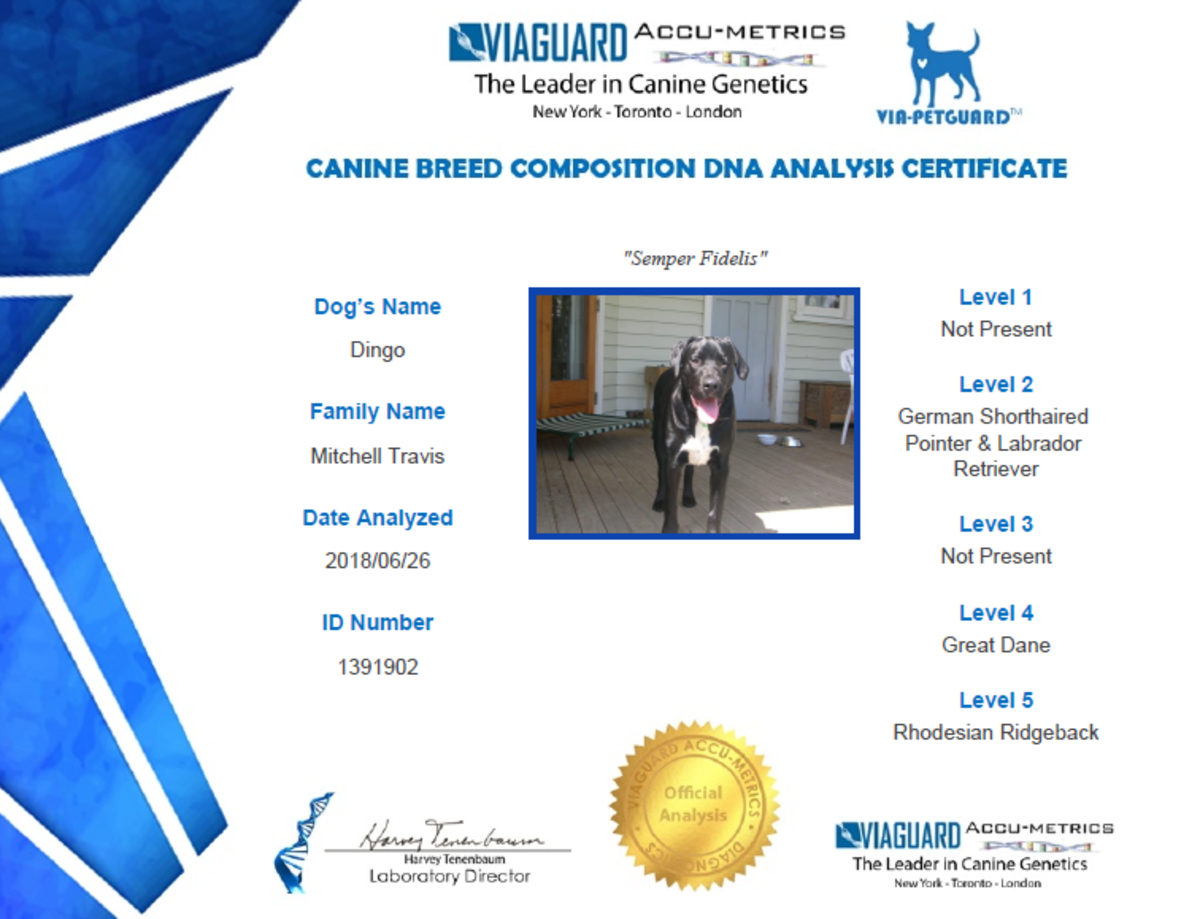 viaguard-accumetrics-dog-breed-dna-test-results-and-review