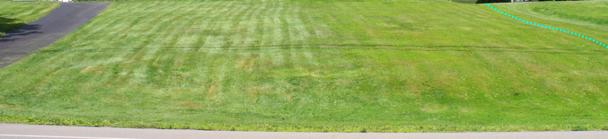 4+ years of no maintenance other than mowing. Taken in June (summer).