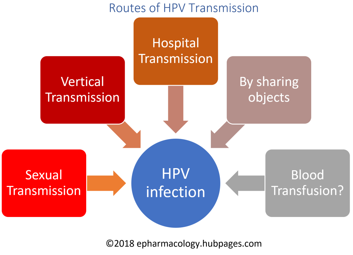 Routes of HPV Transmission