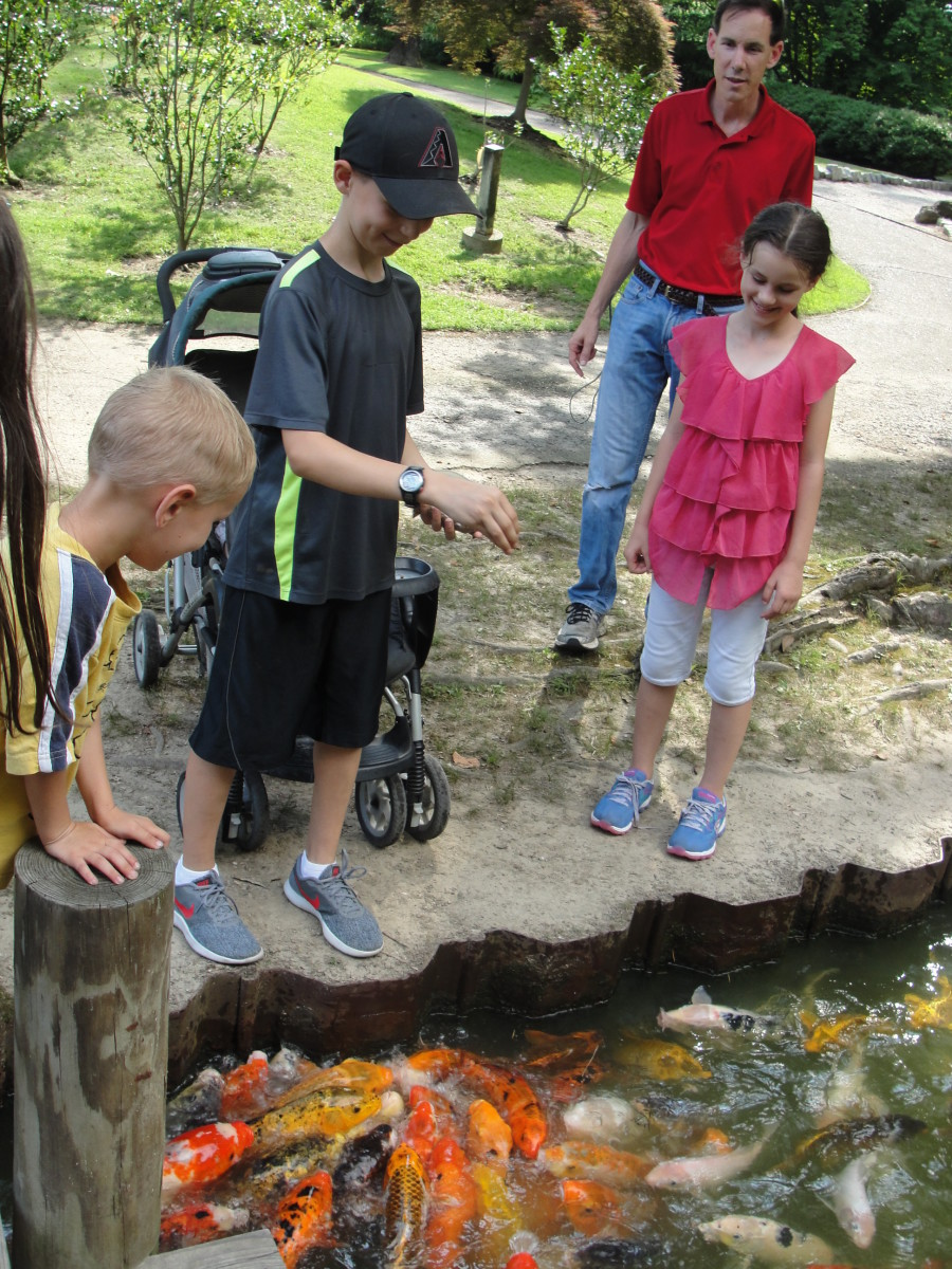 The Memphis Botanical Gardens was one of our favorite places. In addition to seeing the beautiful plants, we loved getting to feed the koi.