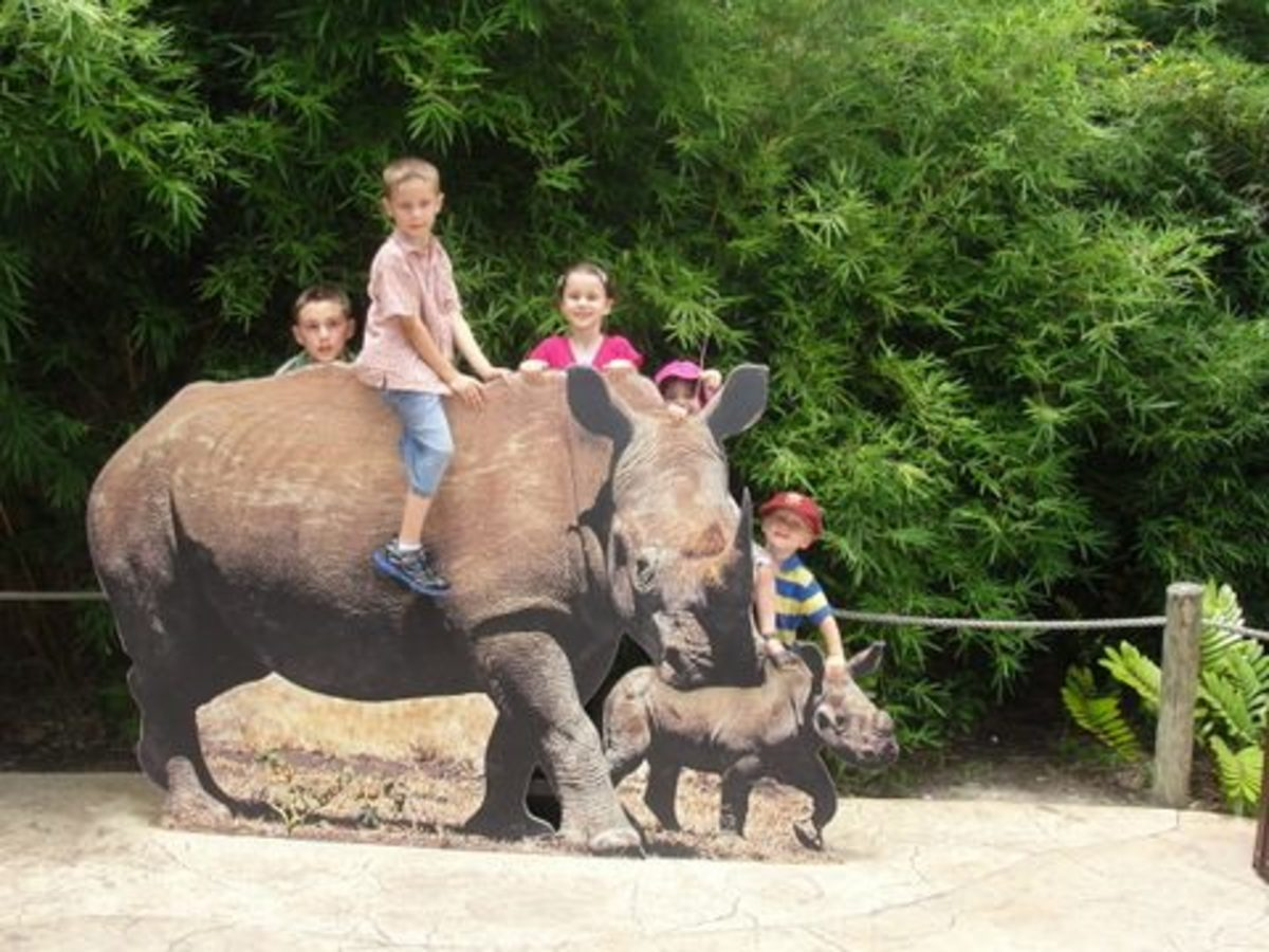 Photo op with a rhinoceros at the Houston Zoo