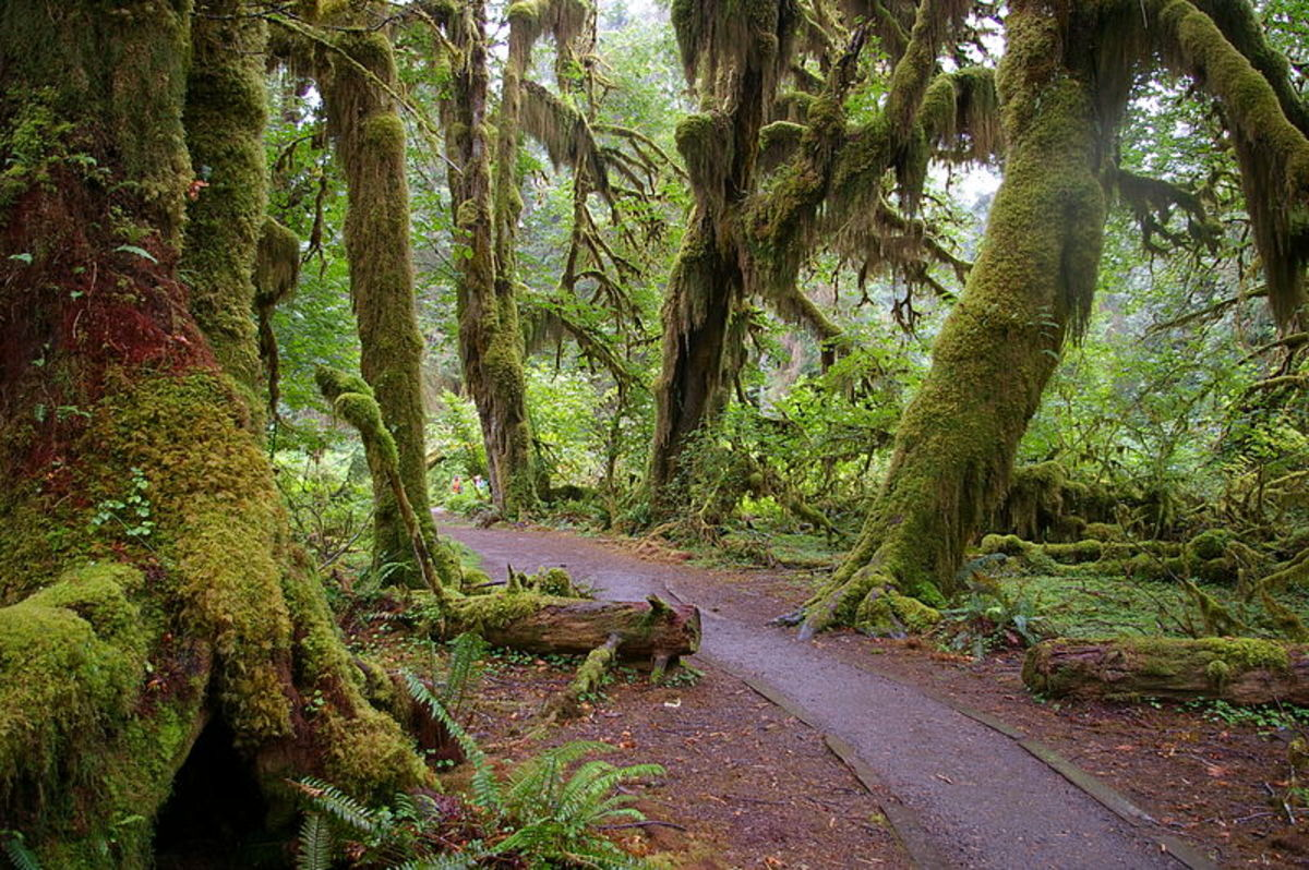 Forest in Forks, Washington.