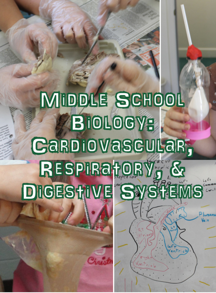 Middle School Biology Lesson on the Cardiovascular, Respiratory, & Digestive Systems