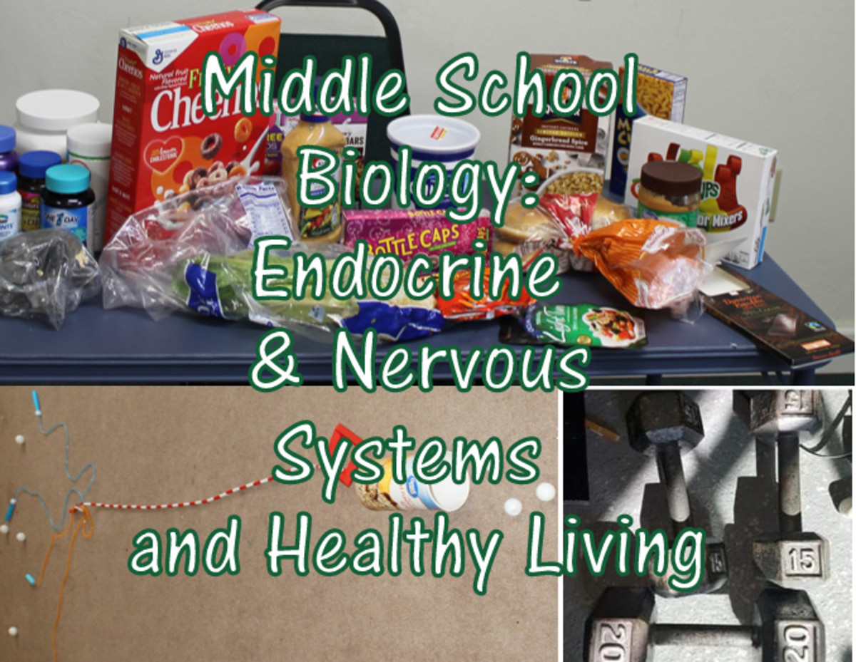 Middle School Biology Lesson on the Endocrine & Nervous Systems and on Healthy Living