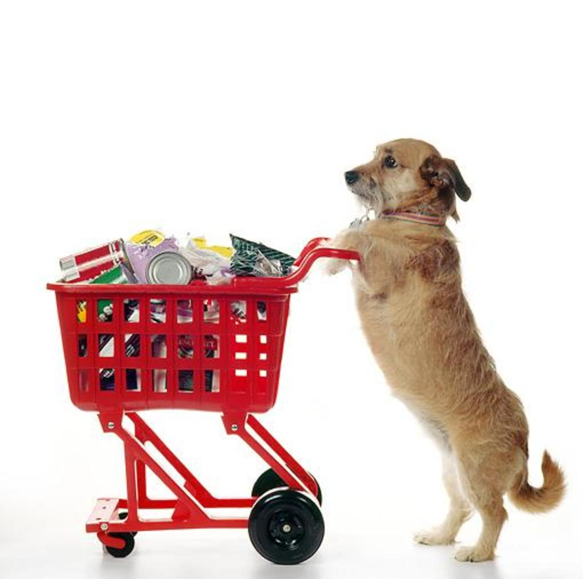 Stop Shopping With Your Dog!