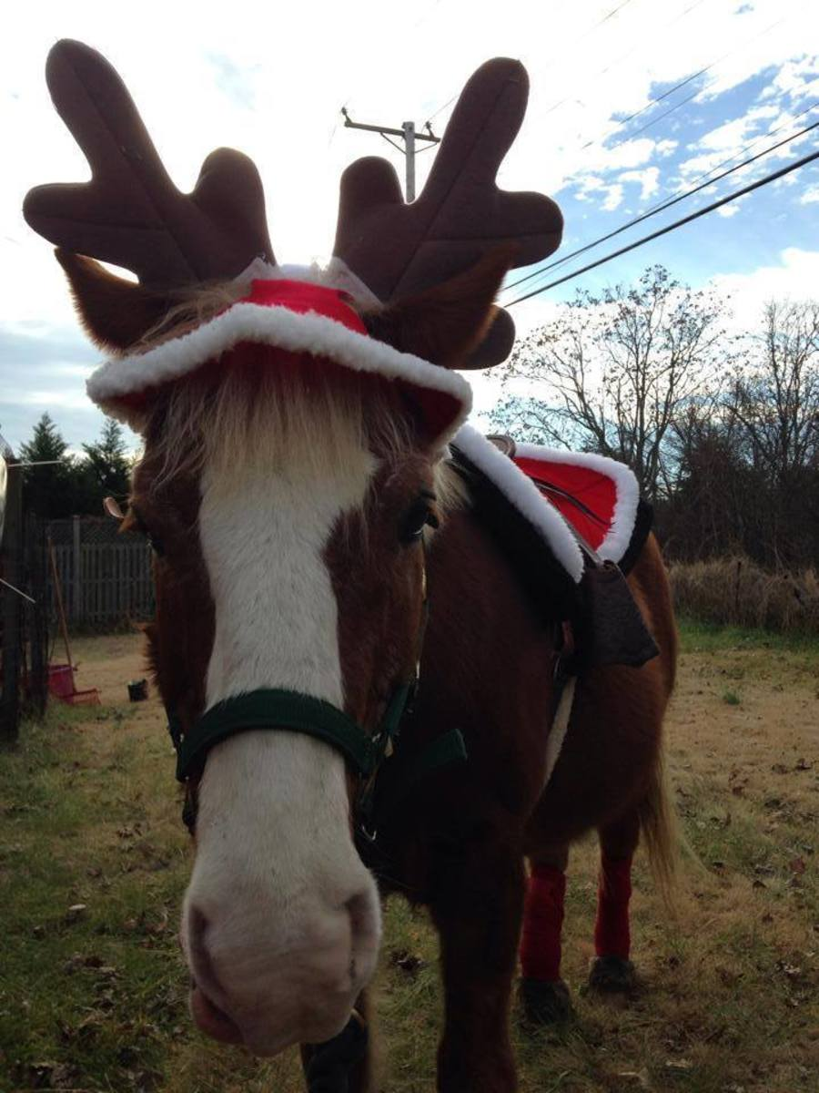 Why Santa Pulls His Sleigh With Reindeer Not Horses