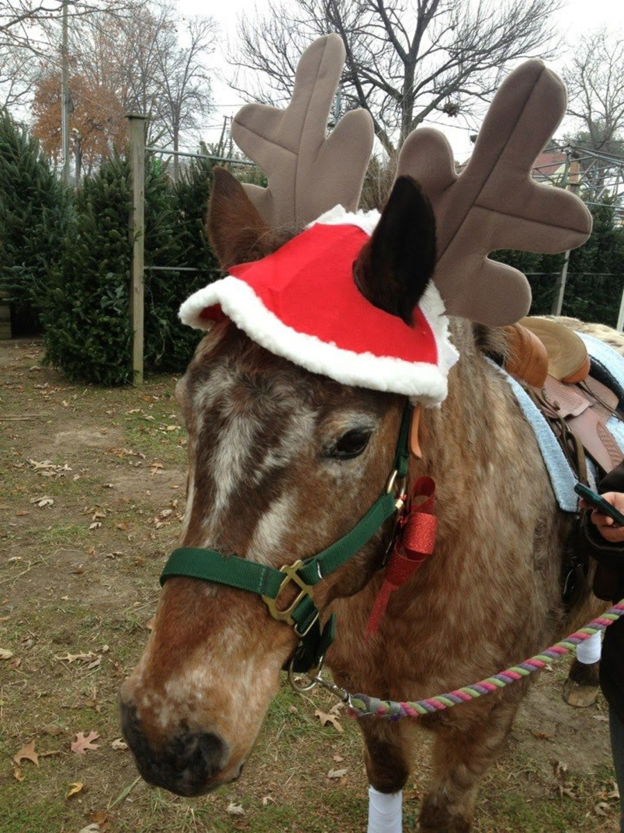why-santa-pulls-his-sleigh-with-reindeer-not-horses