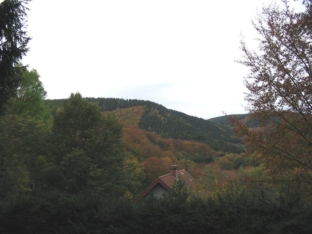 The Hurtgen Forest best ground for defense not offense.