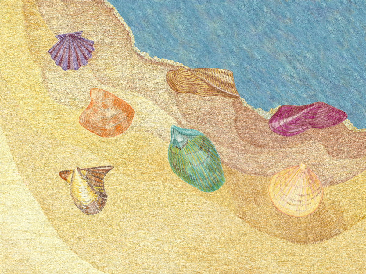 Curious Collectors of  Clam Shells; Identification and Fun Facts