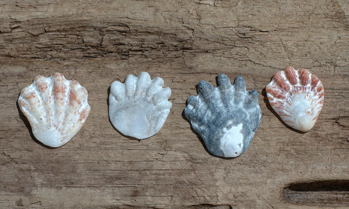Kitten's Paws Seashells - Plicatula giblosa
