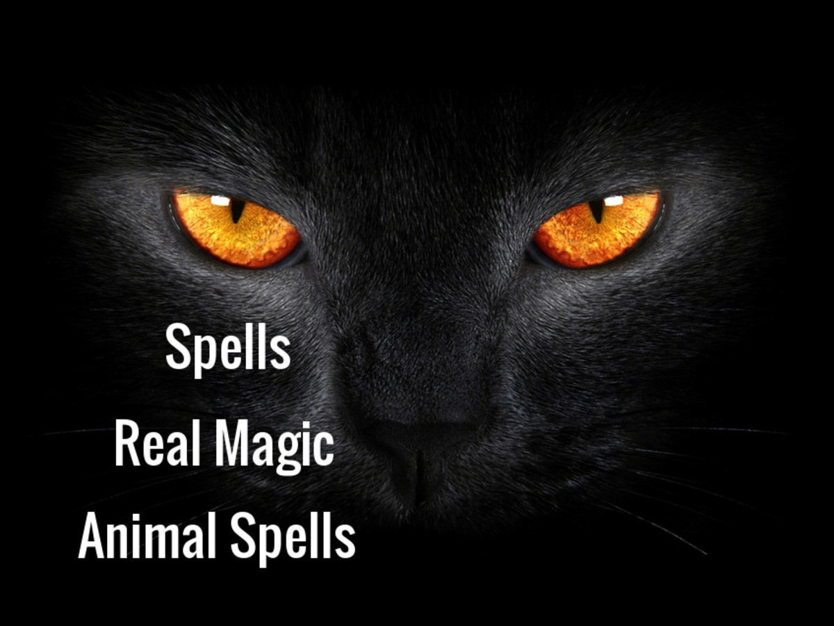 Real Magic - Animal Spells for Our Fur Babies Protection and Healing