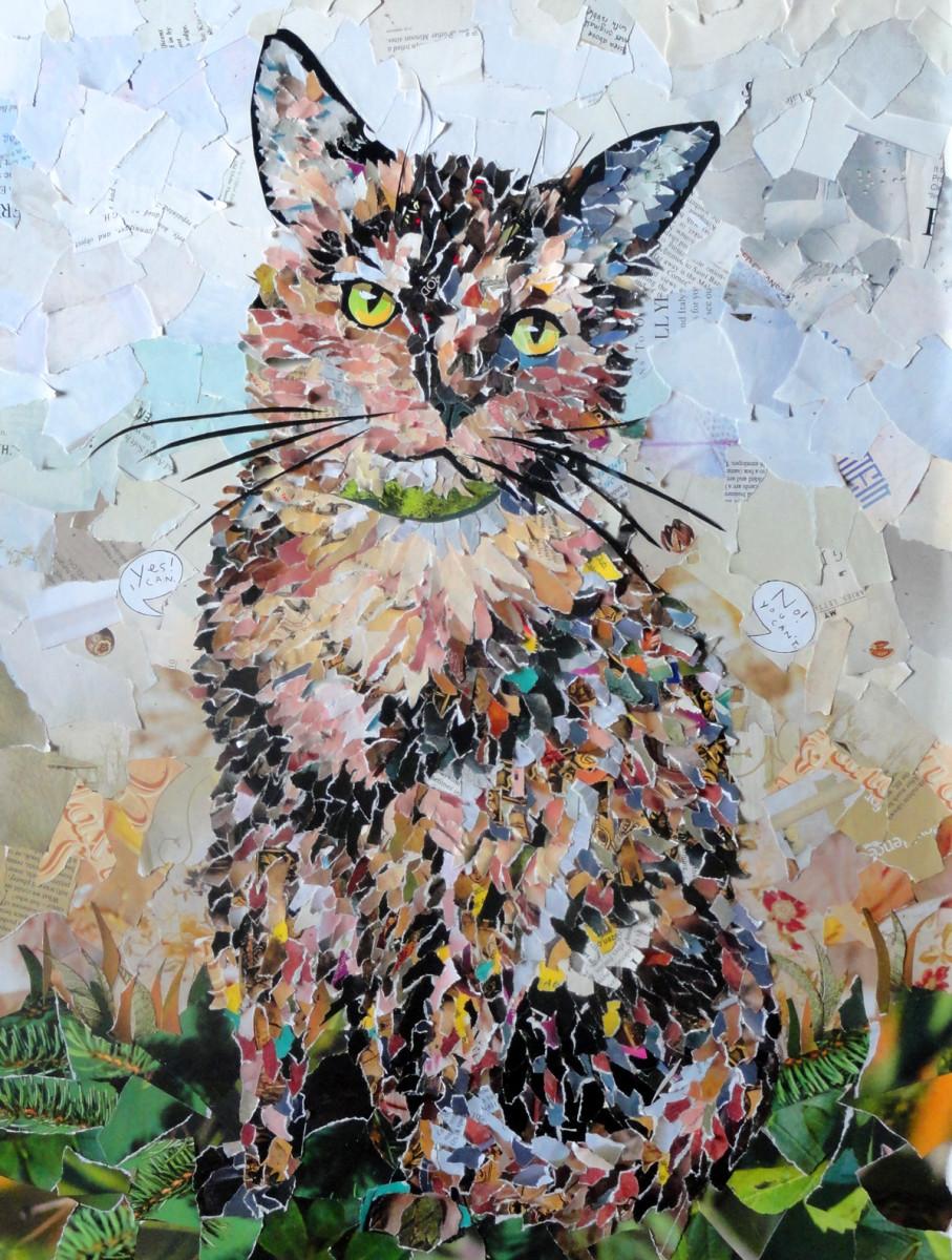 Carpet, the Cat