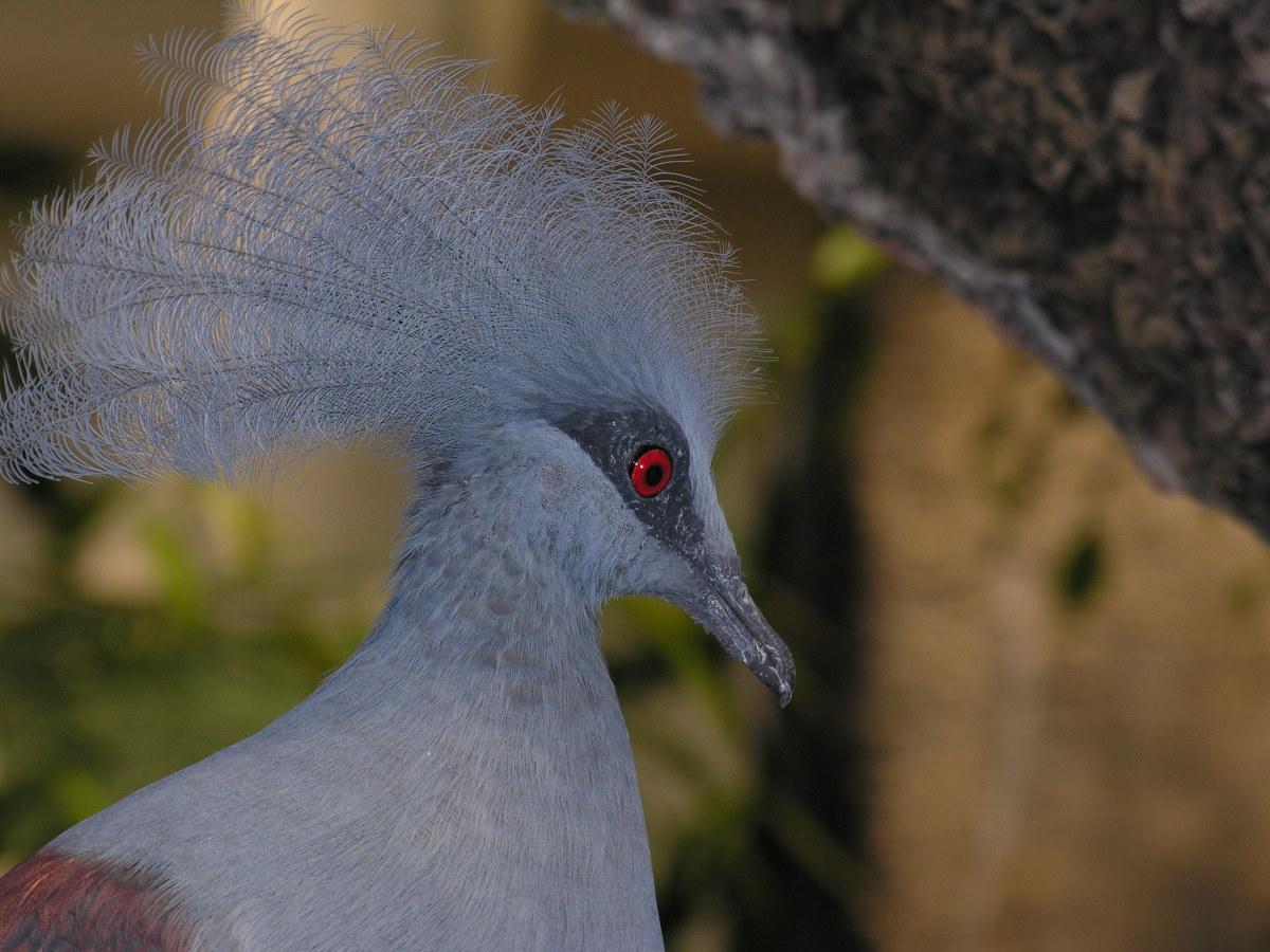 A closeup of a bird, July 2008
