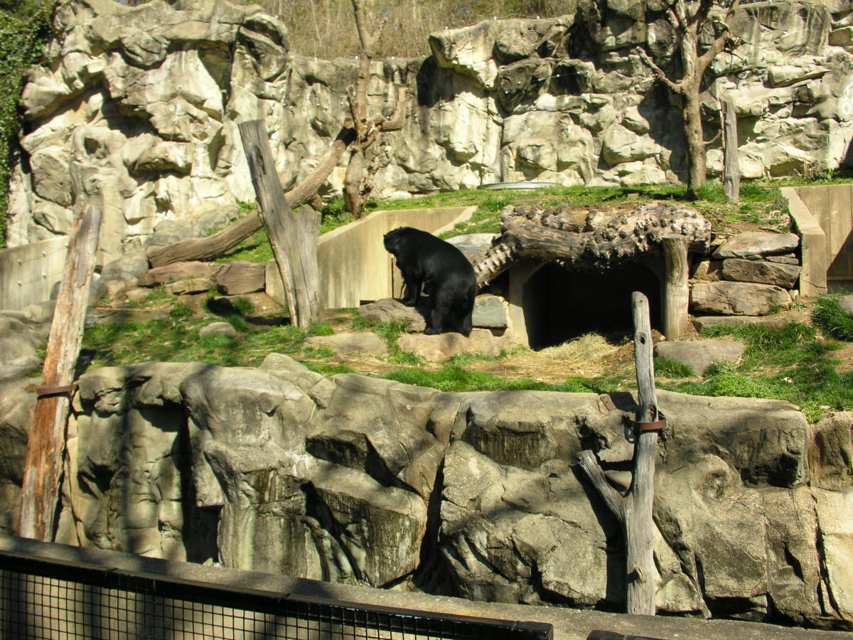 A bear at the North American exhibit, March 2019.