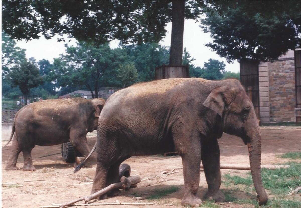 The elephant exhibit, 1996.