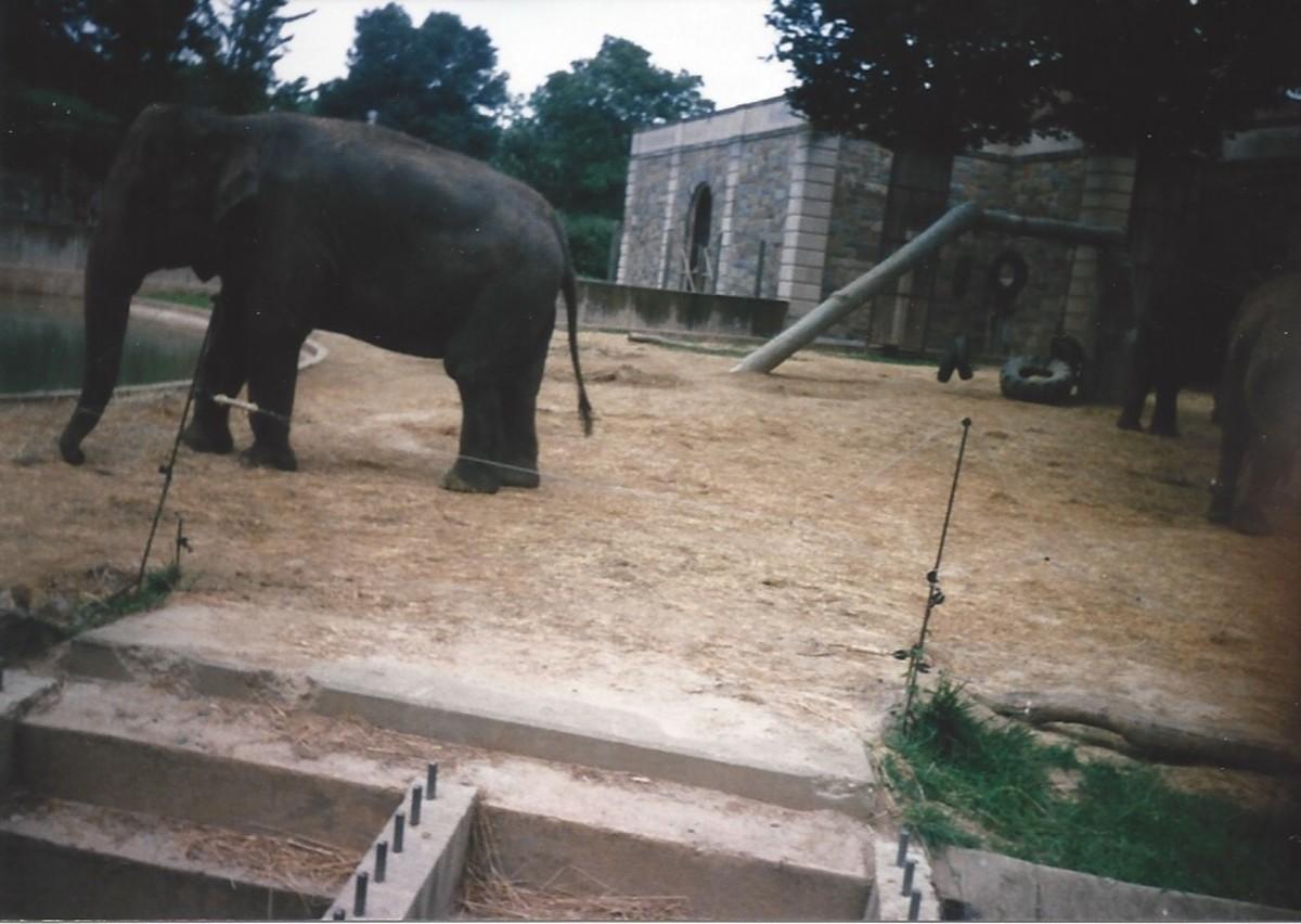 The elephant exhibit before renovation.