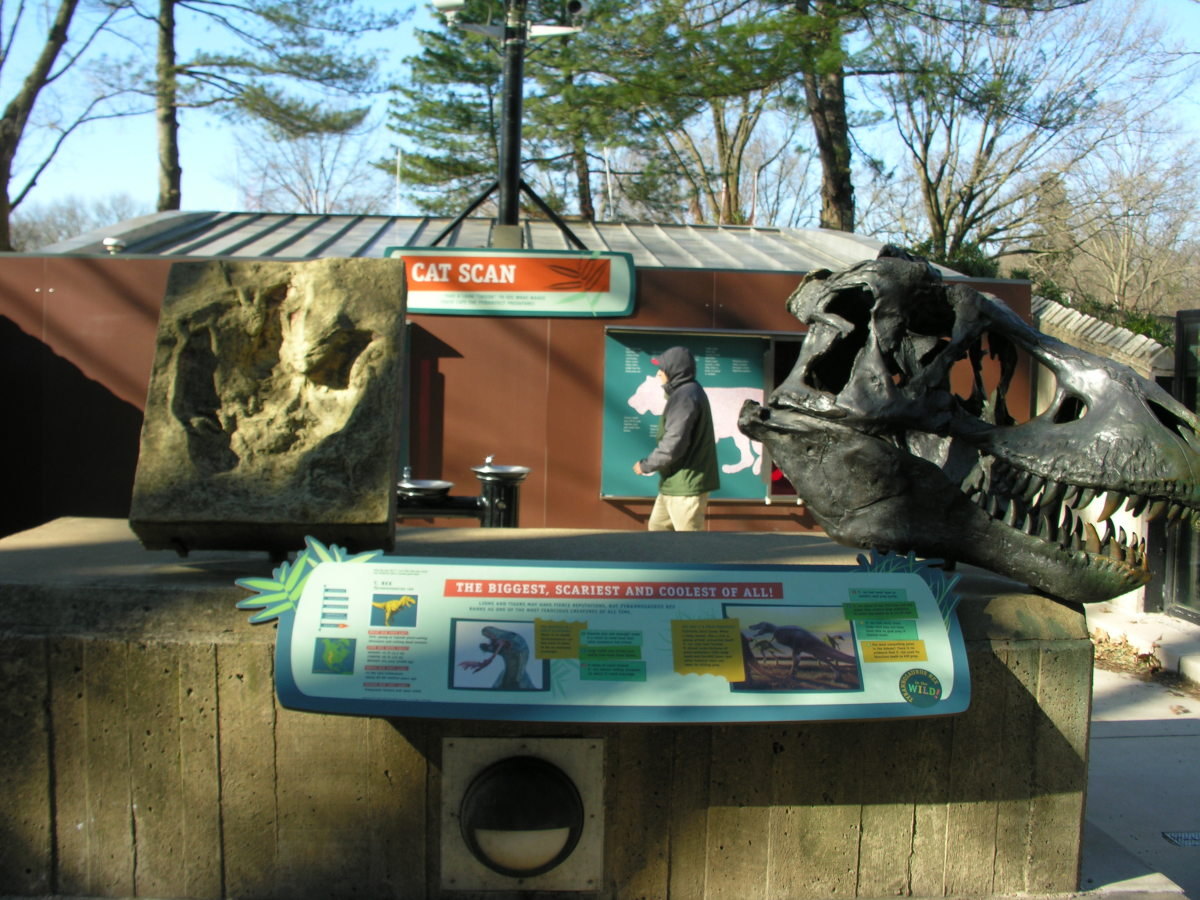 A tyrannosaurus footprint and a bronze cast of a tyrannosaurus skull at the Big Cats exhibit, March 2019