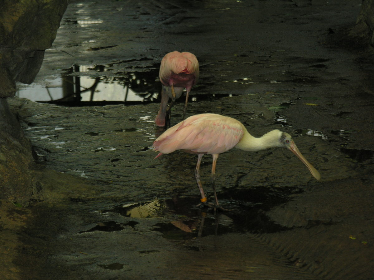 A pair of birds at Amazonia, March 2019.