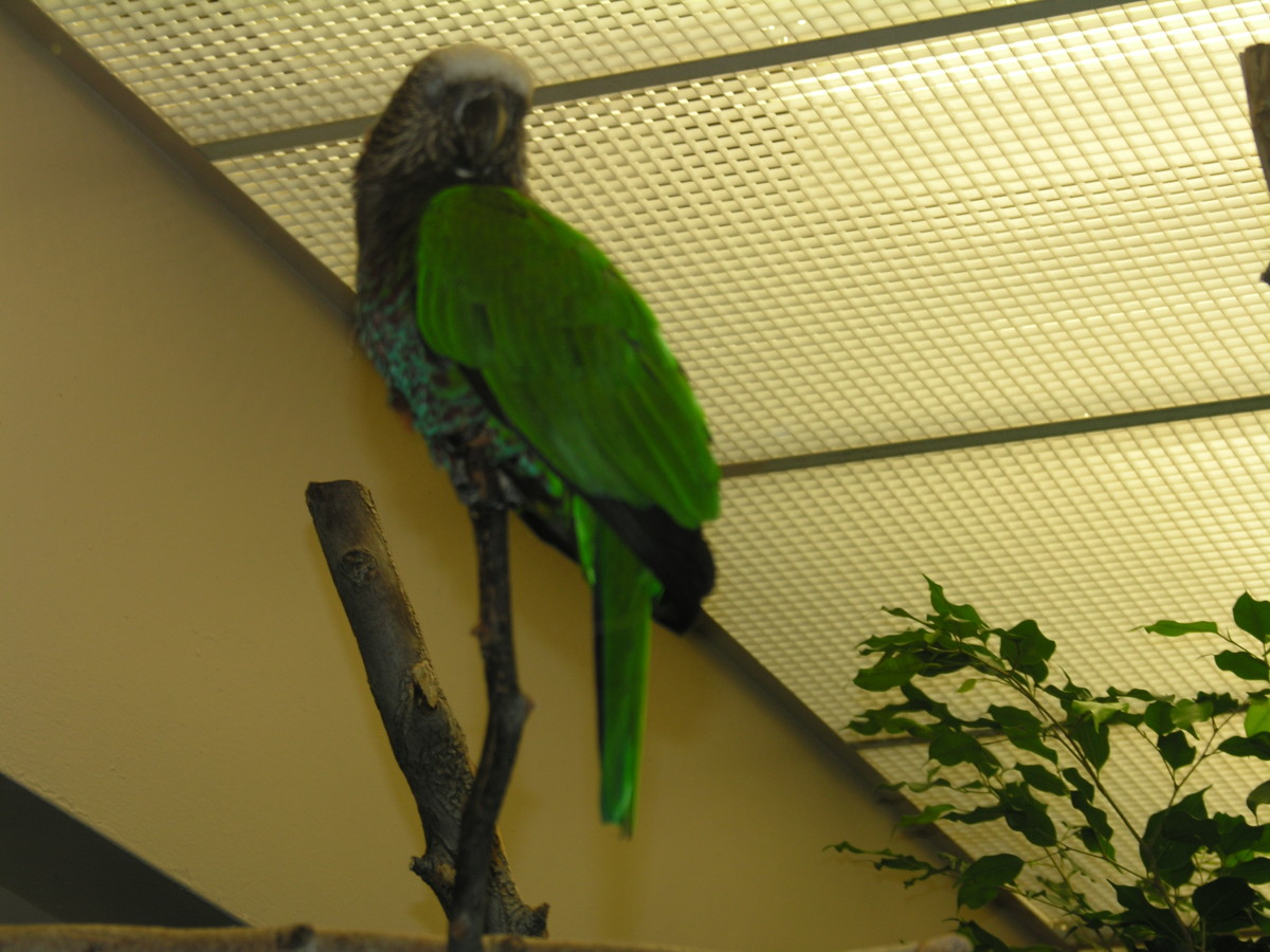 A bird indoors, July 2008