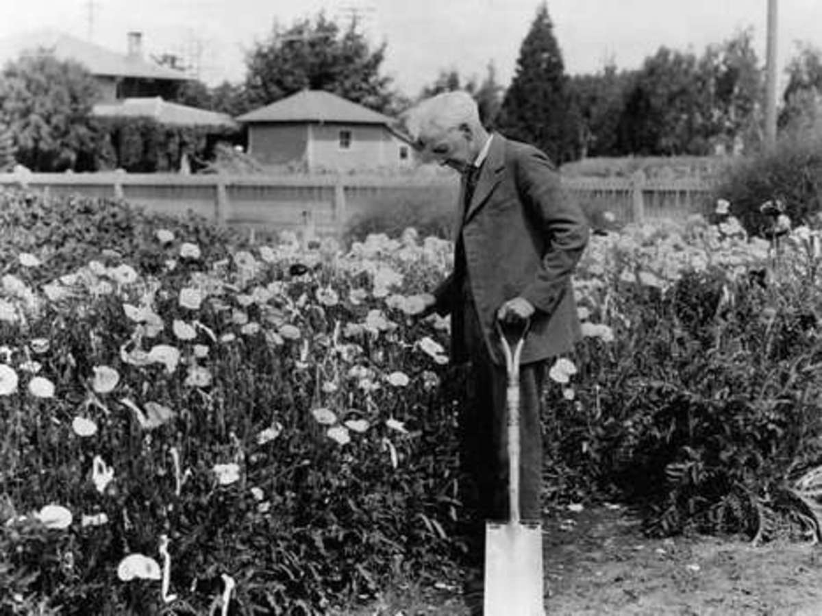 """Luther Burbank, often called """"the wizard of the plant world"""""""
