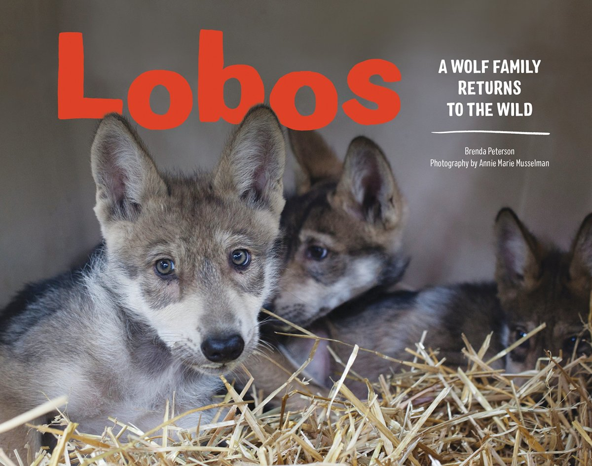 Lobos: a Wolf Family Returns to the Wild by Brenda Peterson