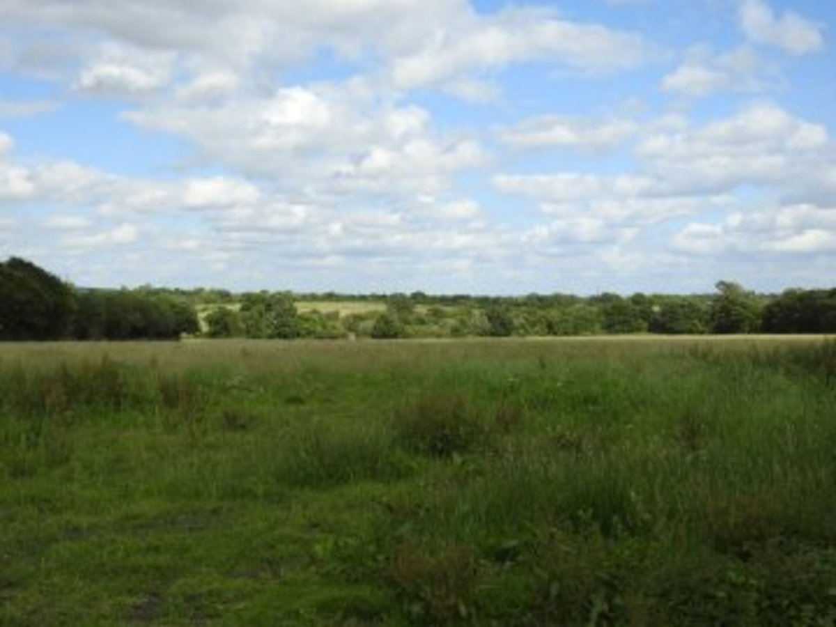 A photograph of one of the many fields that surround Castle Hills Farm.