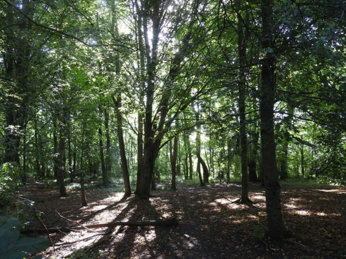 The young beech wood at Elmdon Manor is an excellent place to marvel at the simple beauty of nature.