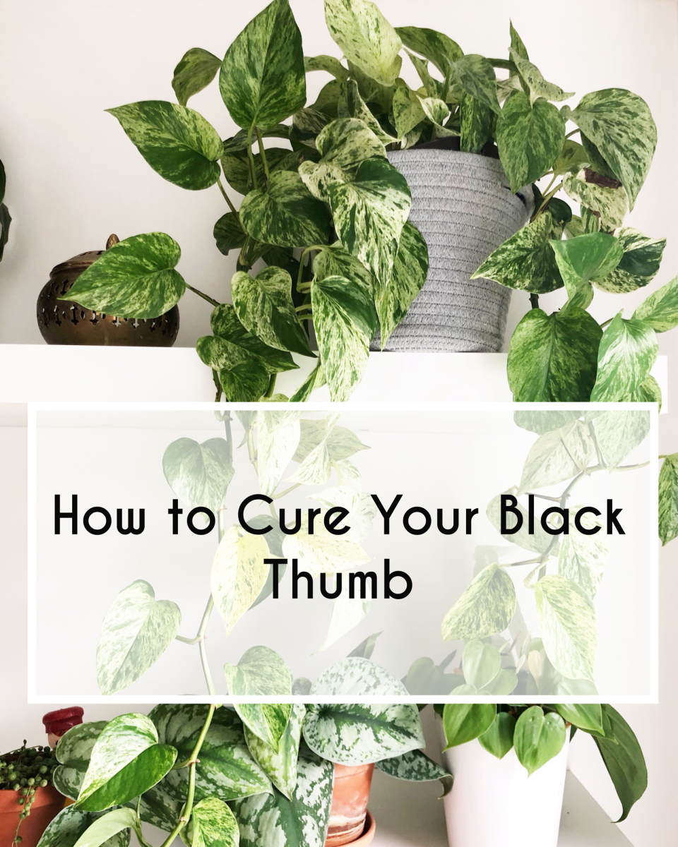 How to Cure Your Black Thumb