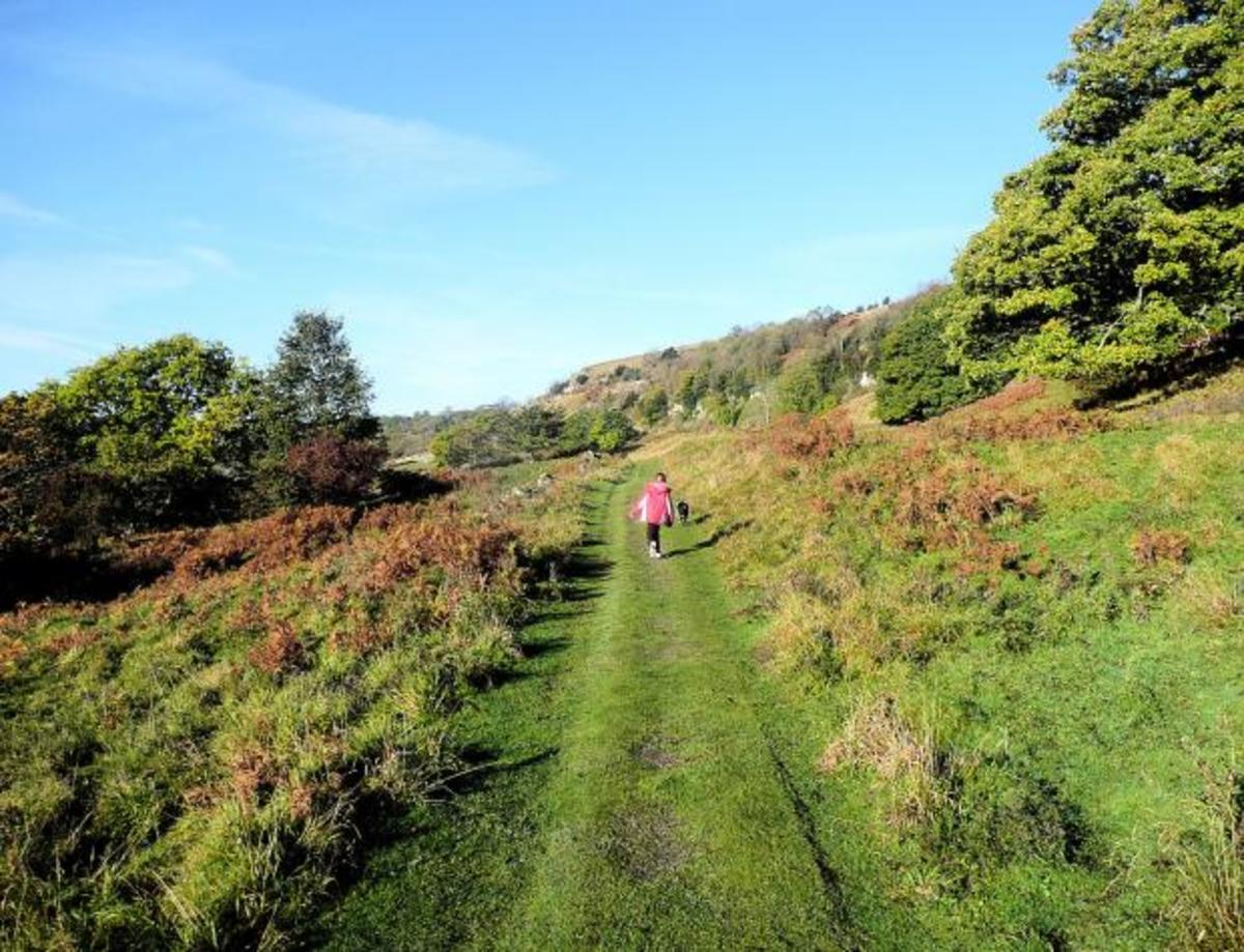 A pleasant gradient to Whitecliffe Woods