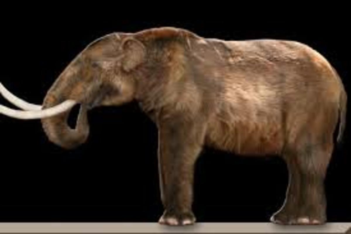 Scientific Name, mammut