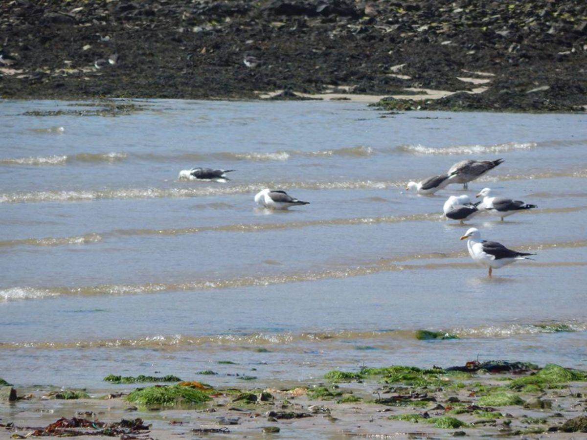 Gulls at Smerwick Harbour ©Pollyanna Jones 2020