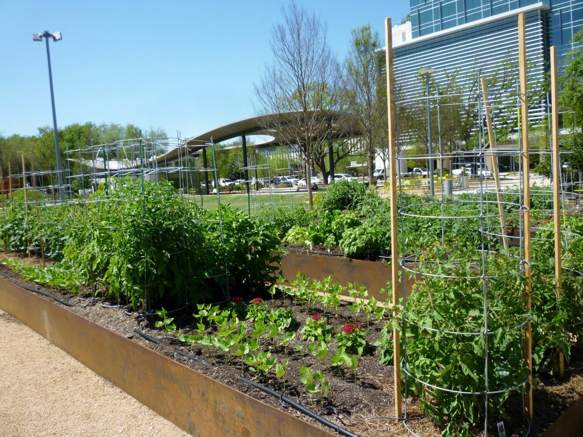 Community Garden in Levy Park