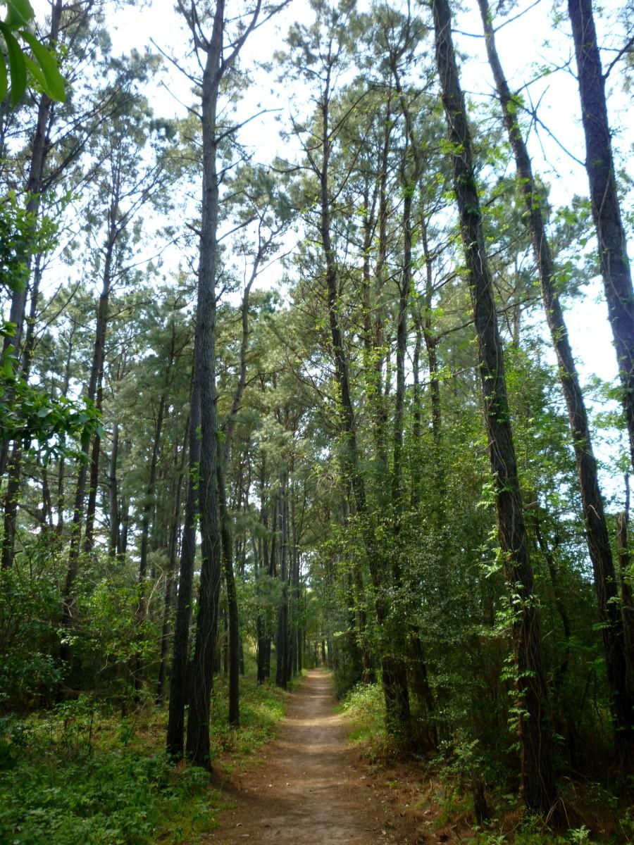 Cullinan Park Trail