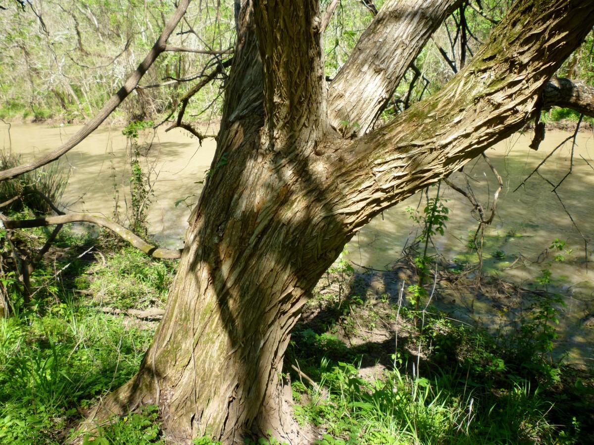Oyster Creek