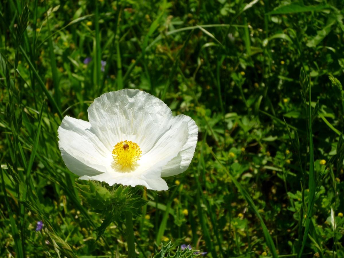 Pretty wildflower