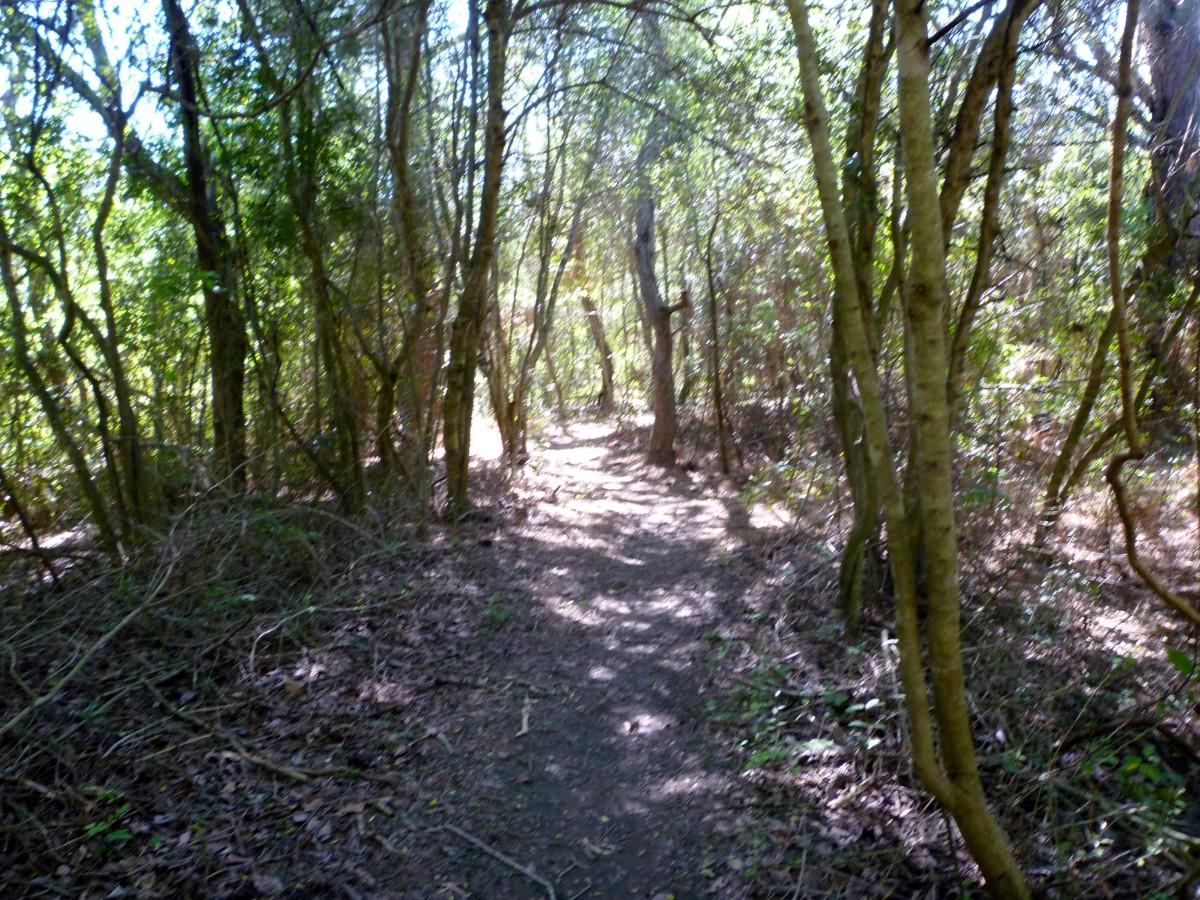 Primitive Park Trail