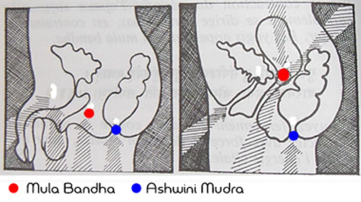 Ashwini mudra