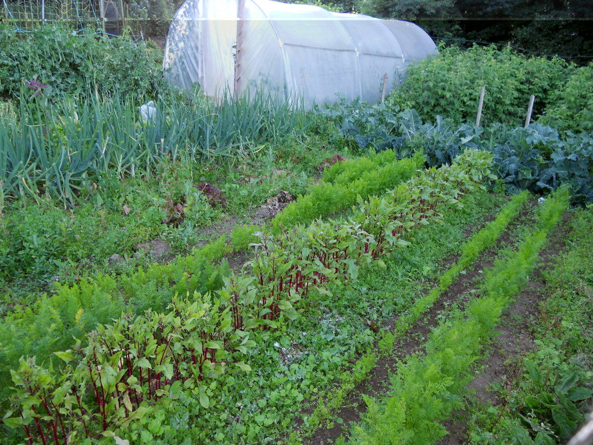 The vegetable plot