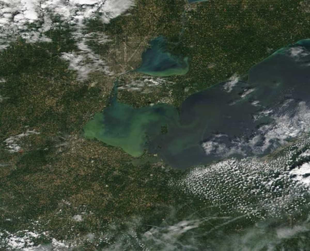 Algae Blooms Seen From Space