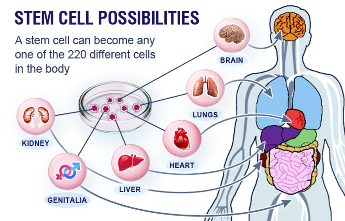 stem-cell-therapy-versus-photobiomodulation