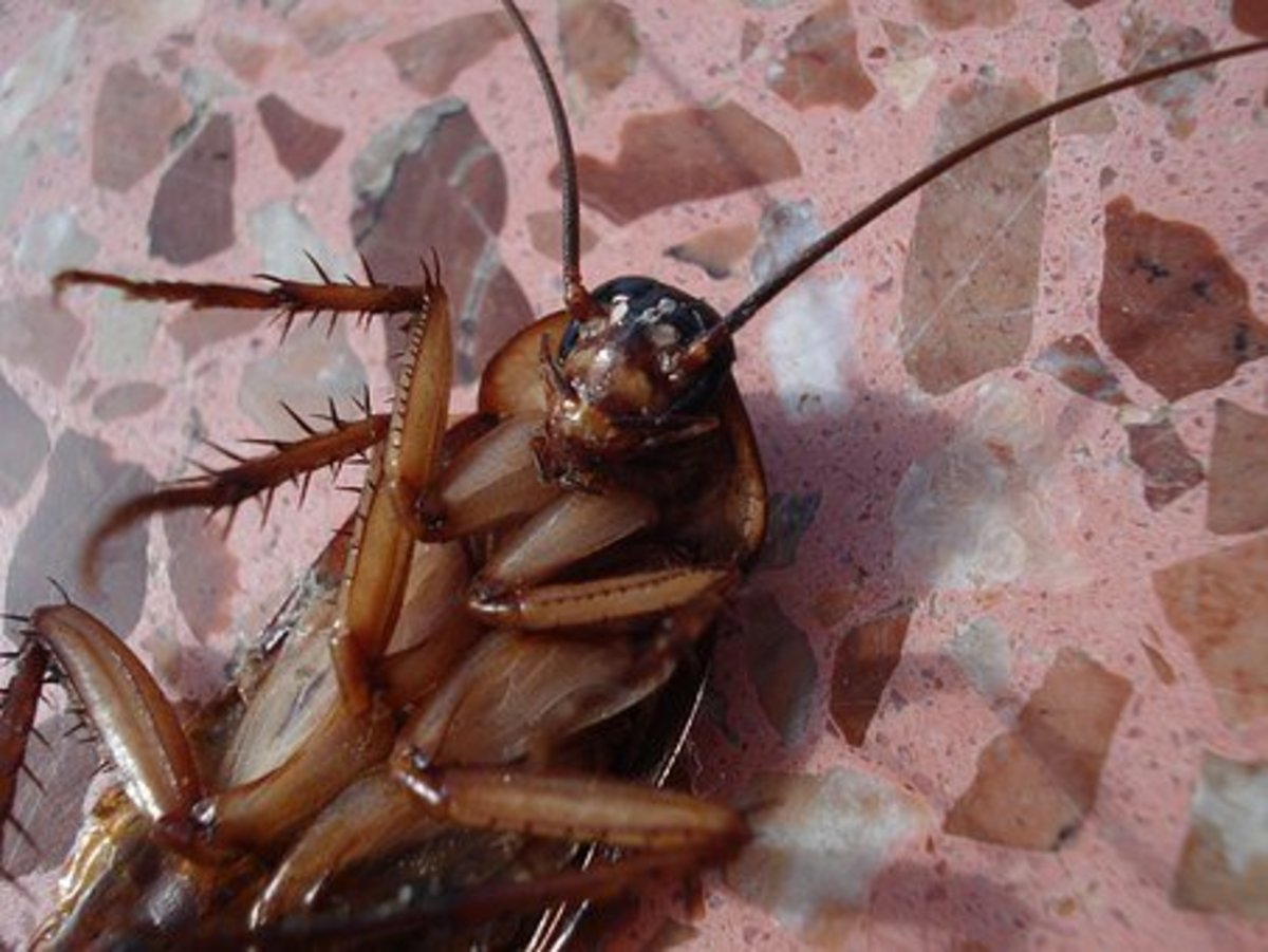 Cockroaches are a menace