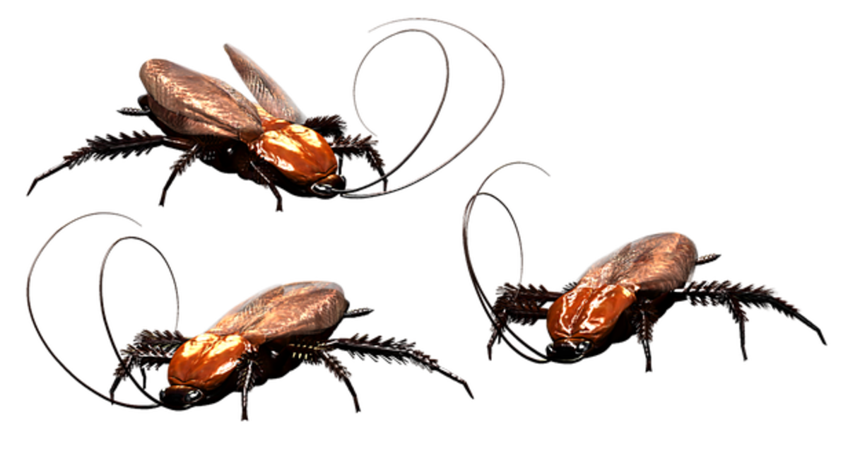 Proven Ways of Preventing Cockroach Infestations in Your Home