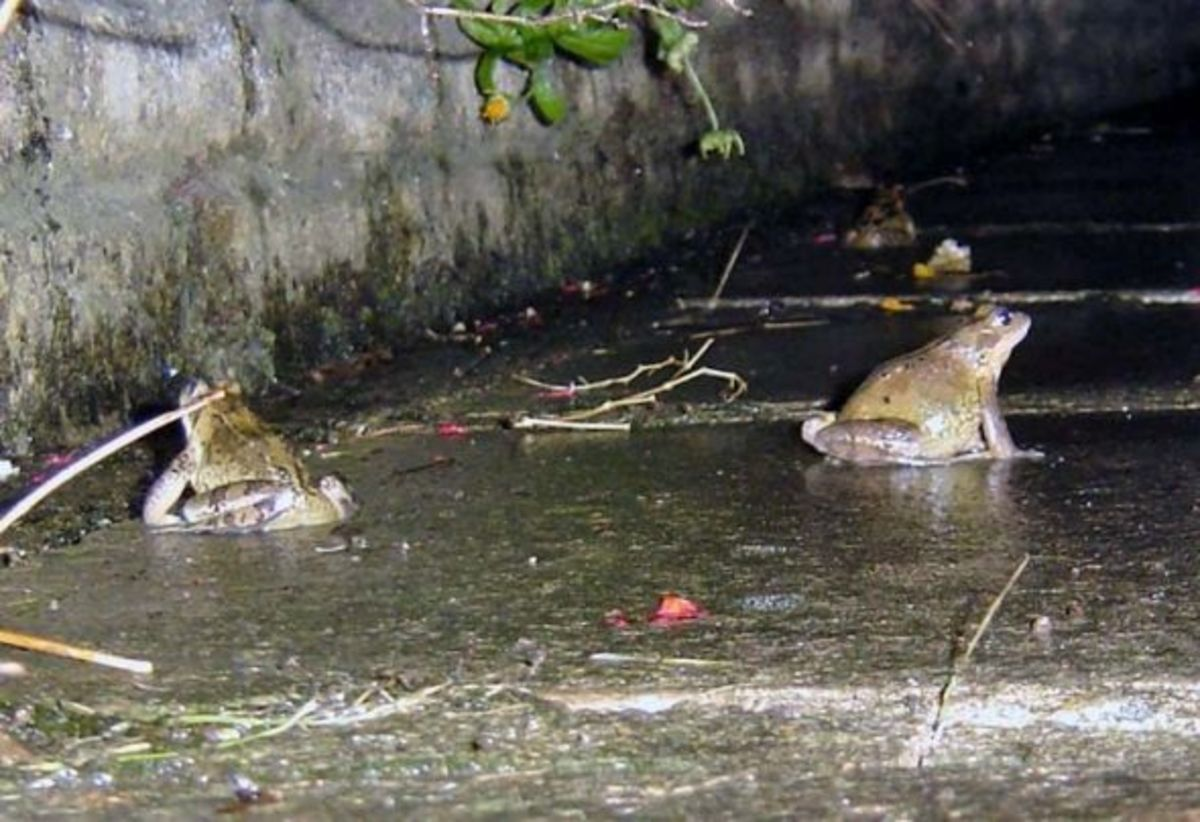 Frogs on Patrol