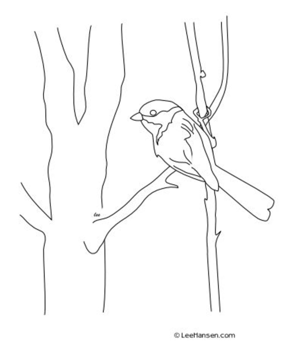 Art sketch coloring page, chickadee bird